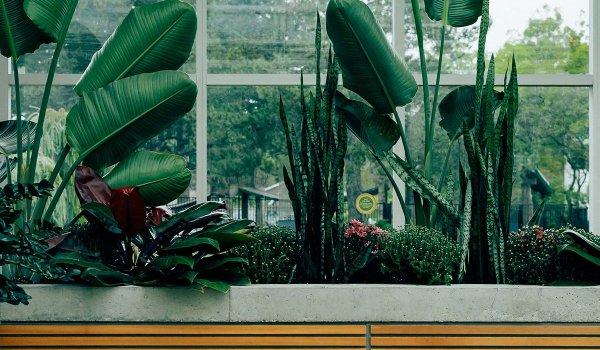 Featured Program: Botany Image